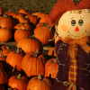 Pumpkin Patches in Dallas - Ft Worth and Surrounding Communities (2018)