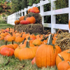 Pumpkin Patches in Dallas - Ft Worth Area