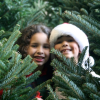 10 Popular Christmas Tree Farms in Dallas - Fort Worth and Surrounding Areas