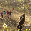 Go Birding at Texas State Parks this April