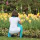 Spring Gardening Tip from the Dallas Arboretum