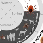 Top Ten Facts you Need to Know About Ticks