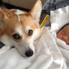 7 Tips to Help Your Dog Get Comfortable Having a New Baby in the Home