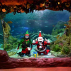 Scuba Diving Santa at Sea Life Aquarium