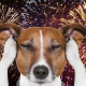 How to Help Your Pet Through the Stress of Fireworks Noise