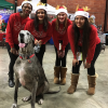 Fabulous Fur-topia of Fun at Deck the Paws Holiday Pet Expo