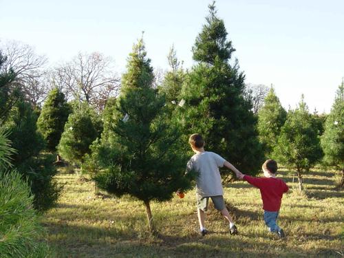 North Texas Kidsyou Cut Christmas Tree Farms In Dallas