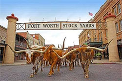 The Herd - free things to do in Ft. Worth - North Texas Kids Magazine