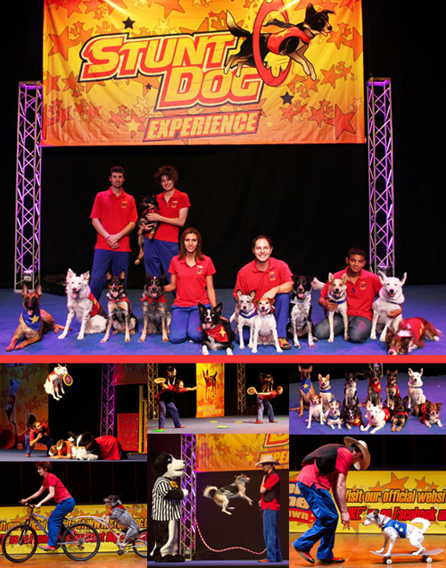 The Stund Dog Experience - Presented by AT&T Performing Arts