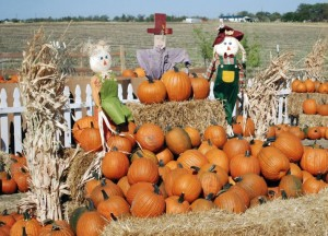 FWMB 2016 Guide to Pumpkin Patches Fall Festivals