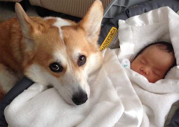 Tips to Help Your Dog Get Comfortable with Your New Baby