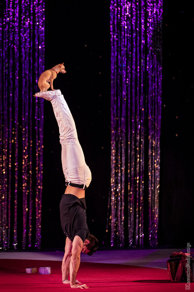 Christian Stoinev - La Fete - Lone Star Circus - Dallas Children's Theater - North Texas Kids Magazine (CMD)