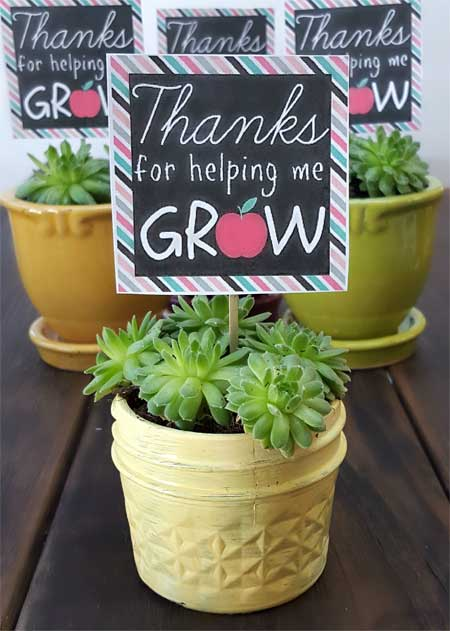 Teacher Appreciation Gifts - Succulent Garden - North Texas Kids Magazine