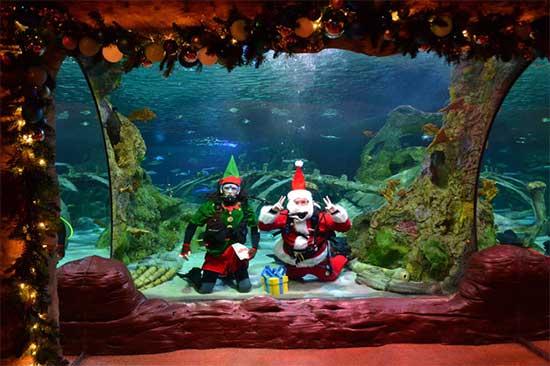 Scuba Diving Santa - SeaLife Aquarium - North Texas Kids Magazine