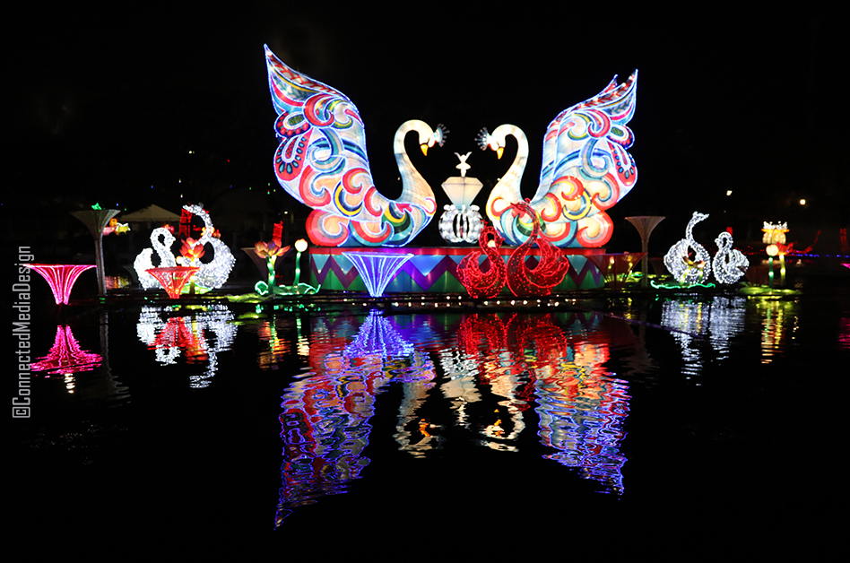 Floating Swans - Holiday Wonder Dallas - North Texas Kids Magazine