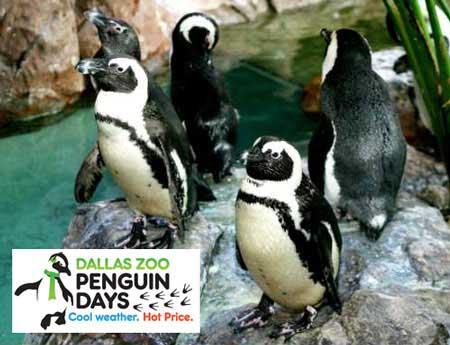 Penguin Days - Dallas Zoo - North Texas Kids Magazine