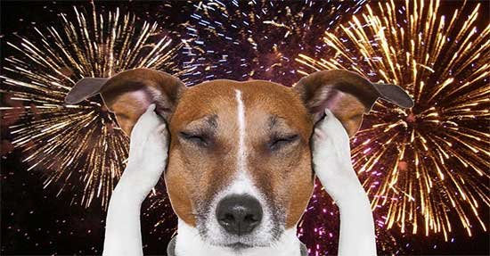 pets and fireworks - north texas kids