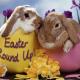 Easter Round Up: Crafts, Bunnies, Egg Decorating, Easter Basket Ideas