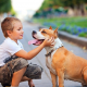 How to Teach Kids to Avoid Dog Bites