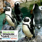 Penguin Days at Dallas Zoo – $7 Admission